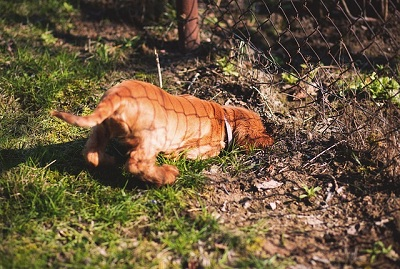 Tips On How To Stop Your Dog From Digging Step By Step Guide