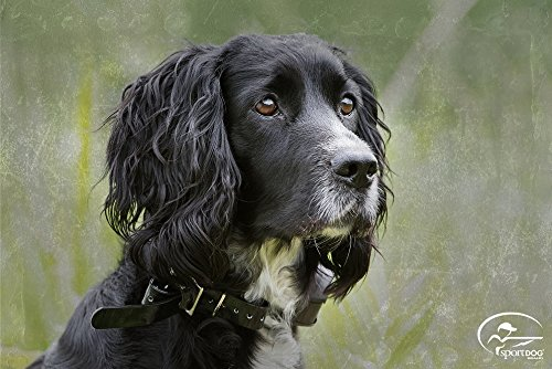 SportDog Field Trainer collar reviews