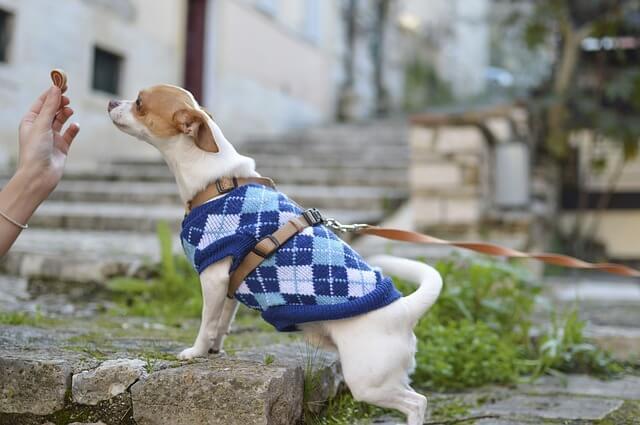 best dog treats for training