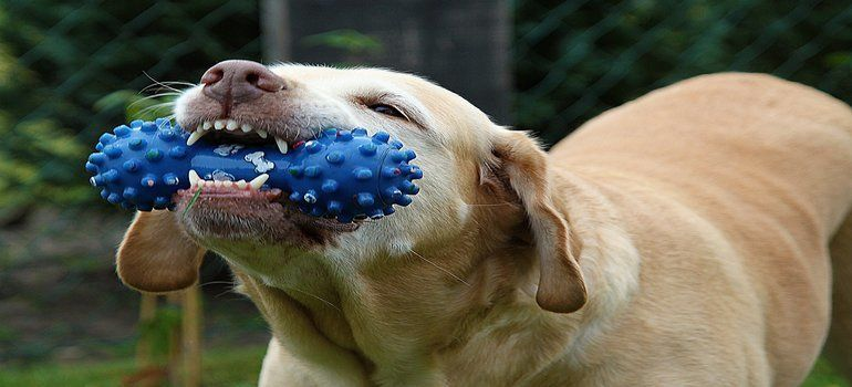 best dog chew toys for aggressive chewers