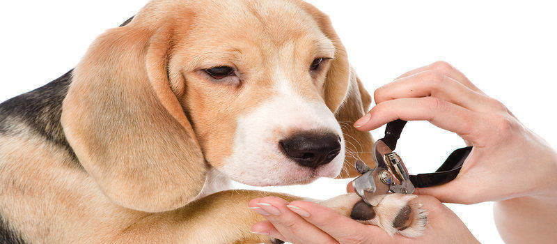 how to stop dog nail bleeding at home