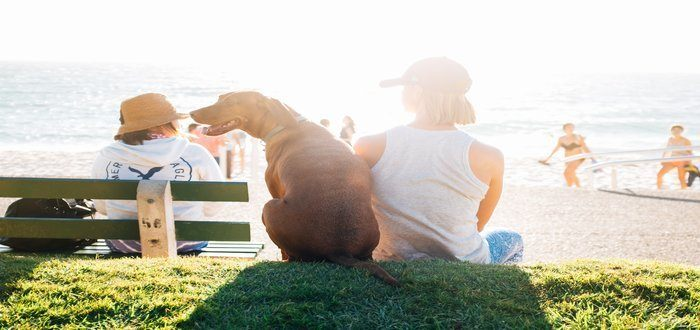 Travel Tips to Help You Plan a Stress – Free Vacation with Your Dog