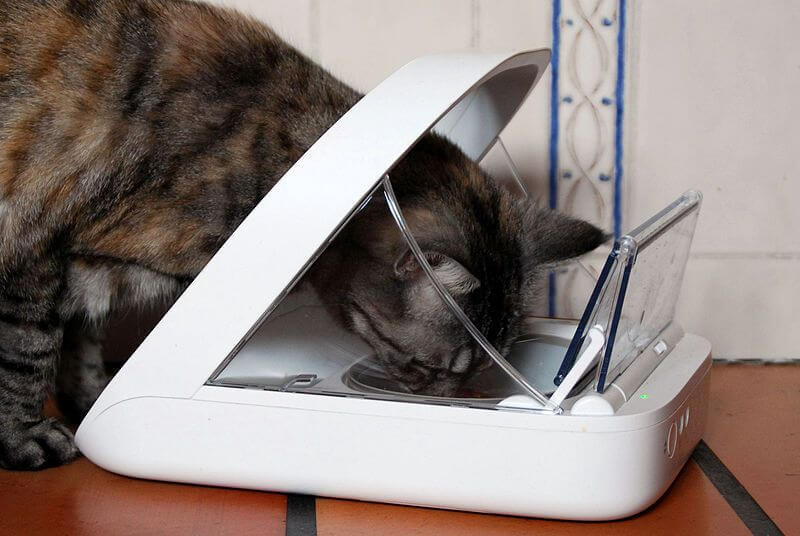 How Does an Automatic Cat Feeder Work