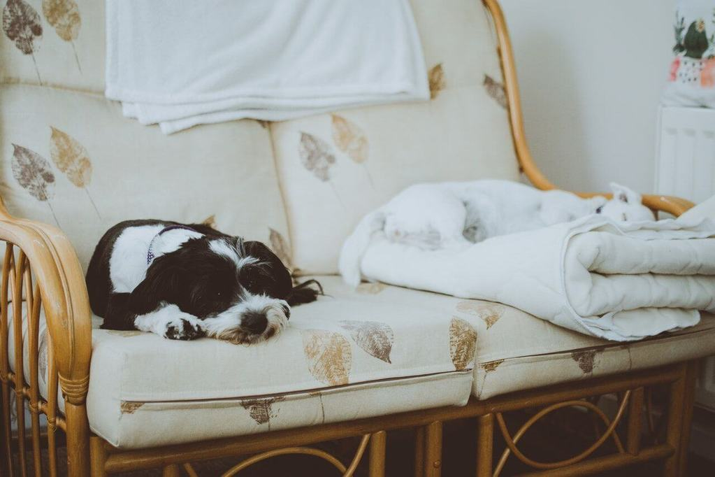 5 Products to Improve Elderly Dog Comfort