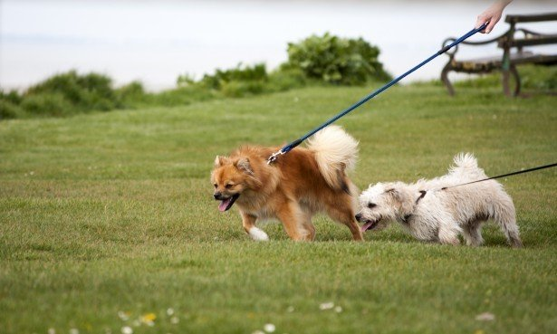 Finding a Reliable Dog Walker