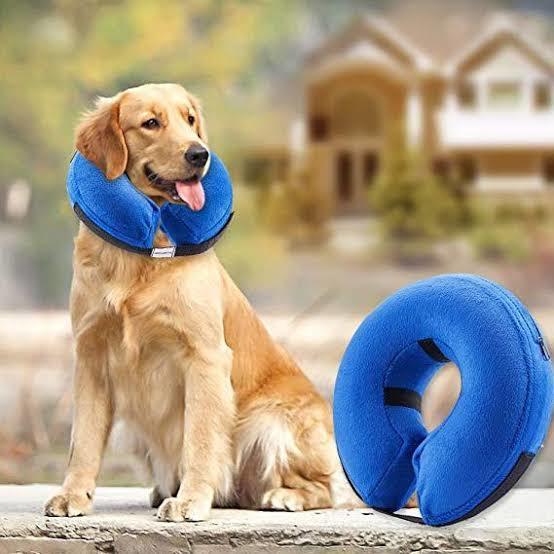 dog neck injury
