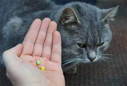 sleeping pills for cat