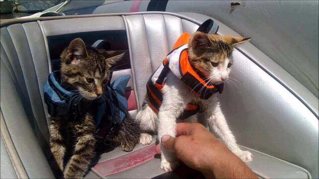 best life jackets for cats review