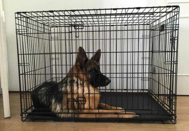 best crate for german shepherd puppy