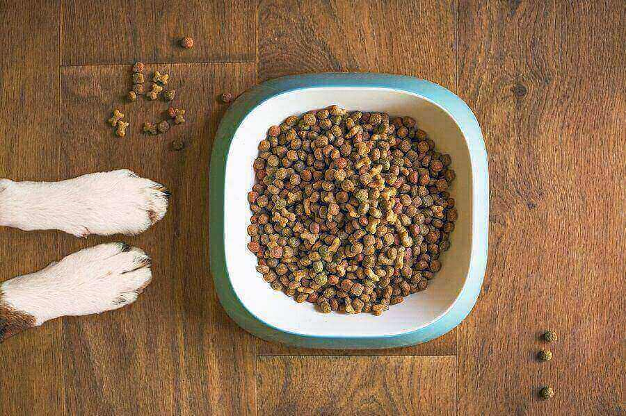 How to Choose the Right Dog Food for Your Pet
