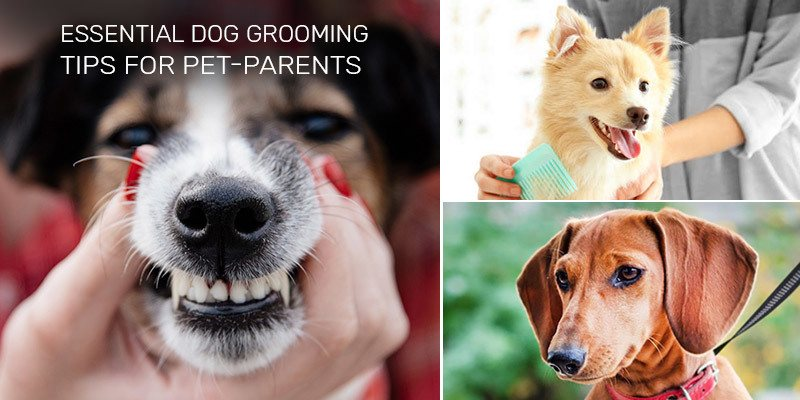 Grooming Basics to Keep Your Dog Healthy
