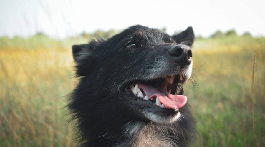 Ways To Get Rid Of Unpleasant Dog Breath