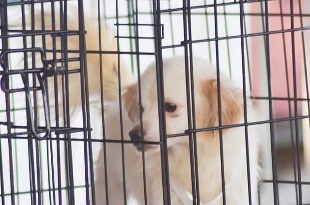How Much Time Does It Take To Train A Puppy For Crates