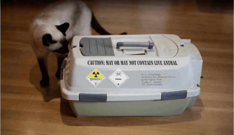 Best cat car carrier with litter box