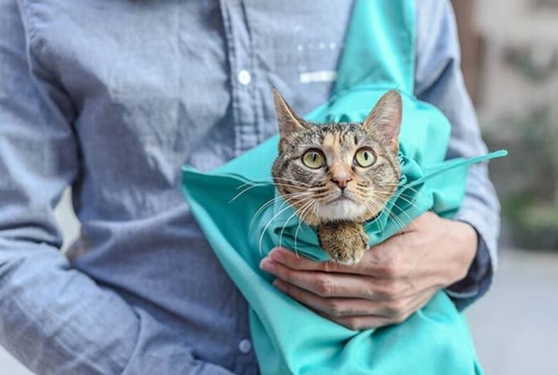 Buying A Cat Carrier Pouch