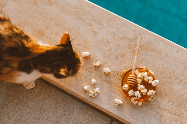 Dry Food Vs. Wet Food Which One Is Better for Your Cat