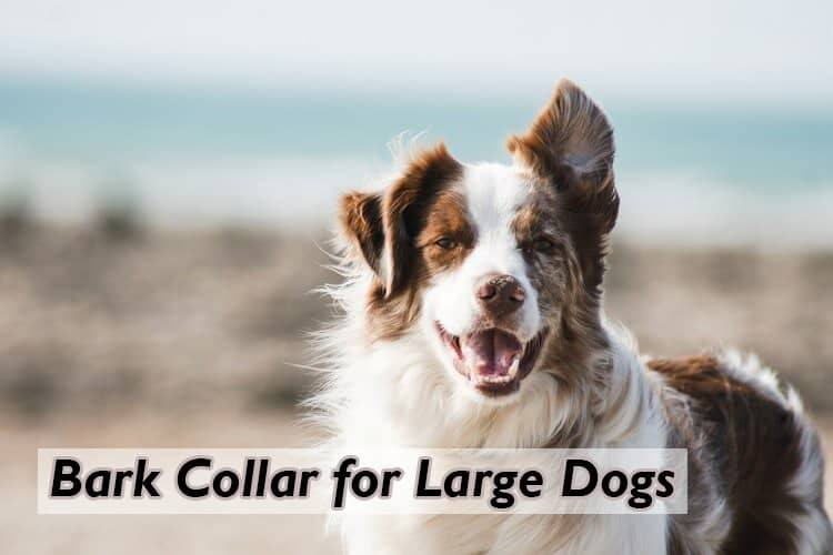 how bark collars are good for large dogs