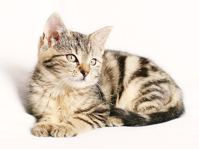 how long can cats hold their pee