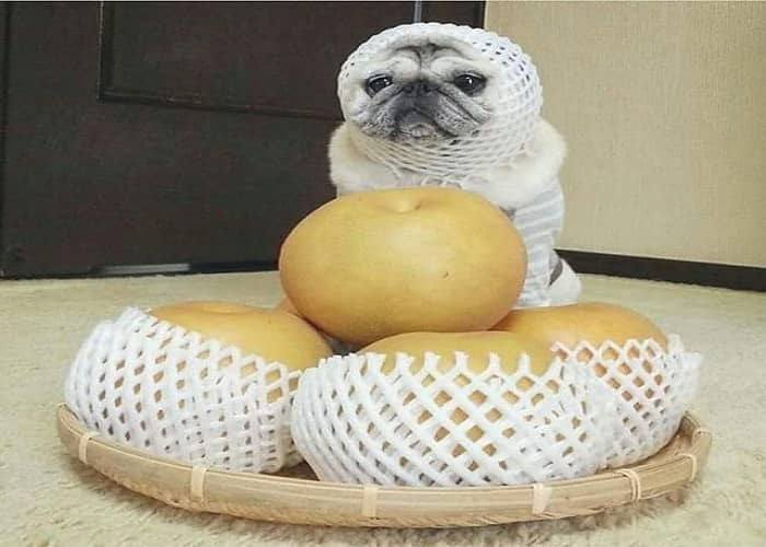 Can Dogs Eat Korean Pears