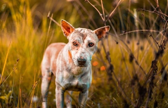 Common Skin Disease in Dogs