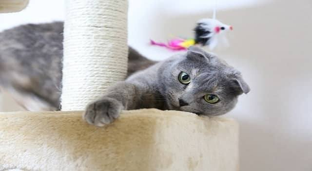 Best Cat Tree For Bengal Cats