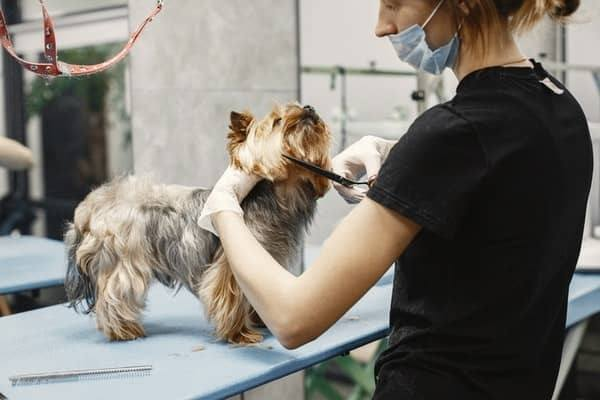 Common Dog Body Injuries While Grooming
